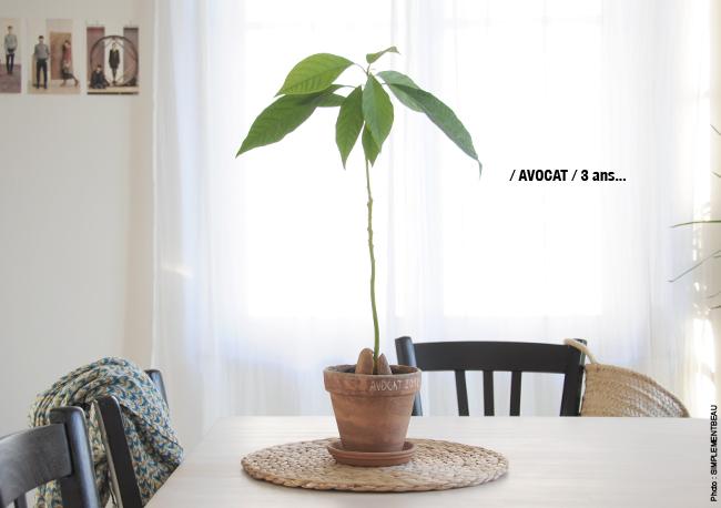 Avocat-1